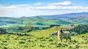 paysage-yorkshire-2