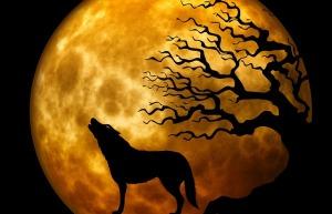 wolf-963081_640