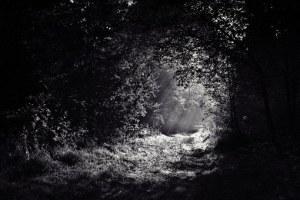 woods-690415__340